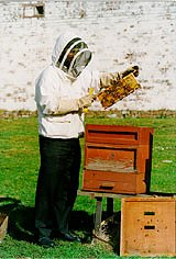 A Student Beekeeper