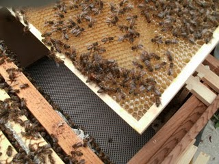 Inside my hive