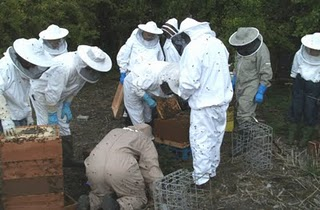 How many beekeepers does it take to hive a swarm?!