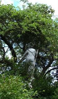 Ian in the tree