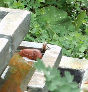 A bee drinking from the water feature