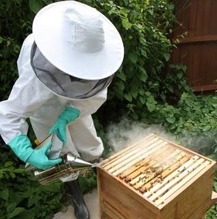Smoking my hive
