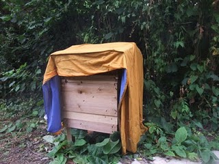 a wet sheet to deter robber bees