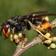 feature_hornet