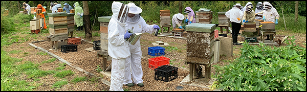 Vale & Downland Beekeepers' Association Teaching Apiary